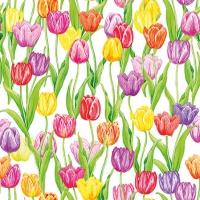 Serviettes 25x25 cm - Magic Tulips