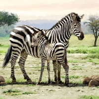 Serviettes 33x33 cm - Zebras