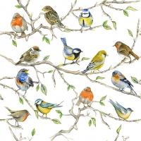 Tovaglioli 33x33 cm - Birds Meeting