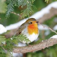 Servilletas 25x25 cm - Robin In Tree