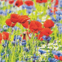 Serviettes 33x33 cm - Poppies and Cornflowers