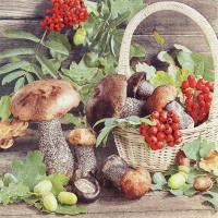 Serviettes 33x33 cm - Fall Season