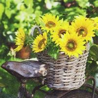 Napkins 33x33 cm - Sunny Flower
