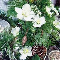 Serviettes 25x25 cm - Winter Rose