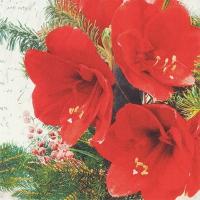 Napkins 33x33 cm - Red Amaryllis