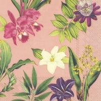 Serviettes 33x33 cm - FLOWERS OF PARADISE apricot