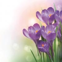 Napkins 33x33 cm - Bunch of Violet Crocuses