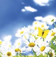 Napkins 33x33 cm - Blue Sky Daisies Meadow