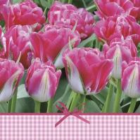 Napkins 33x33 cm - Pink Tulips Time