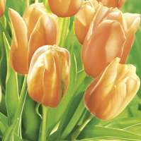 Servilletas 33x33 cm - Fresh Sunny Tulips