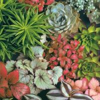 Servilletas 33x33 cm - Succulents Mix
