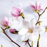 Serviettes 24x24 cm - Magnolia