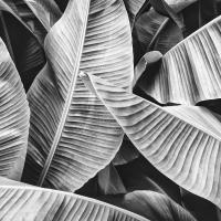 Serviettes 33x33 cm - Big leaves