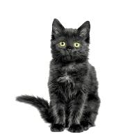 Serviettes 33x33 cm - Black cat