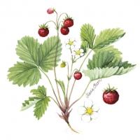 Serviettes 24x24 cm - Wild Strawberry