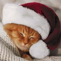 Napkins 33x33 cm - Cute Cat