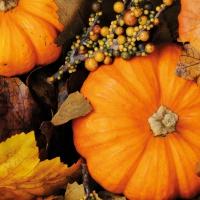 Serviettes 33x33 cm - Fall Pumpkins