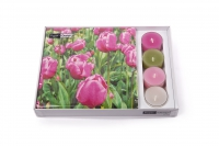 Combibox - Tulip Garden