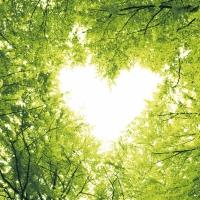 Napkins 33x33 cm - Nature love