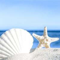 Serviettes 33x33 cm - Shells by the sea