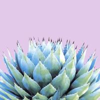 Serviettes 33x33 cm - Cactus