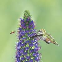 Servietten 33x33 cm - Bird and bee