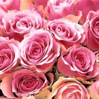 Napkins 24x24 cm - Pink Roses