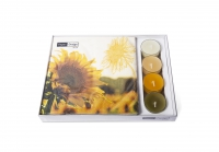 Combibox - Dusk Sunflower