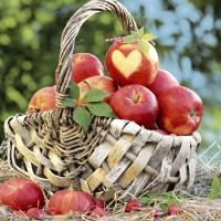 Servilletas 33x33 cm - Apple basket