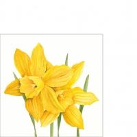 Serviettes 25x25 cm - Daffodils 25x25 cm