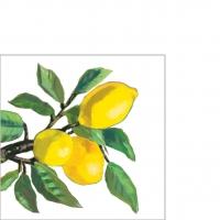 Napkins 25x25 cm - Lemon Musée white 25x25 cm