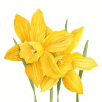 Serviettes 33x33 cm - Daffodils 33x33 cm