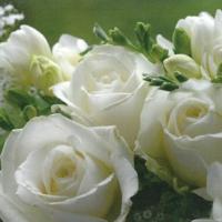 Serviettes 33x33 cm - White Roses 33x33 cm