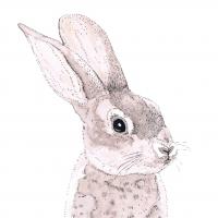 Napkins 33x33 cm - Rabbit Napkin 33x33