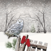 Servilletas 25x25 cm - Wintry Owl Napkin 25x25