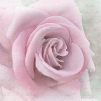 Serwetki 33x33 cm - Rose Letter