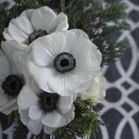 Napkins 33x33 cm - White Anemones