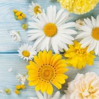 Serviettes 33x33 cm - Brillantes Flores de Jardin