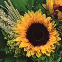 Serviettes 33x33 cm - Sunflower with Straw