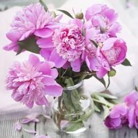 Napkins 33x33 cm - Peonias Rosas