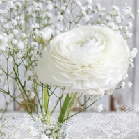 Napkins 33x33 cm - Rêve Blanc