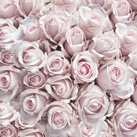 Servilletas 25x25 cm - Pastel Roses
