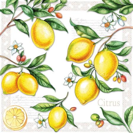 Serviettes 25x25 cm - Citrus