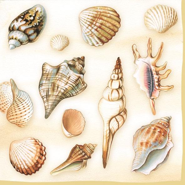 Serwetki 33x33 cm - Shells Cream