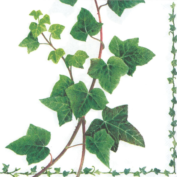 Napkins 33x33 cm - Ivy Tendril