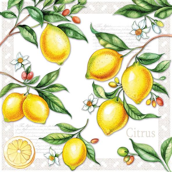 Napkins 33x33 cm - Citrus