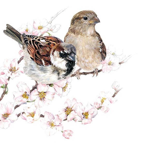Napkins 33x33 cm - Sparrows Blossom