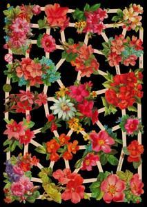imágenes brillantes - Blumen