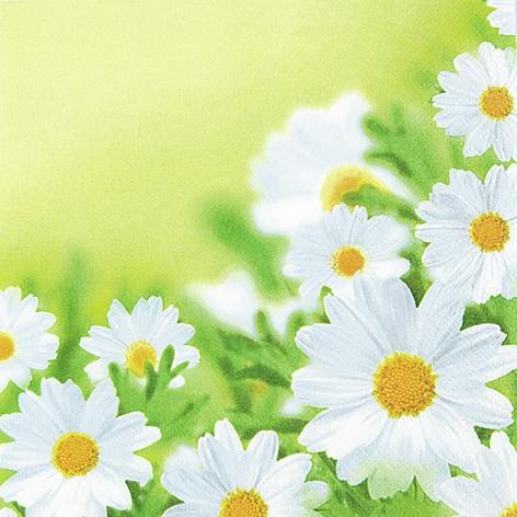 Napkins 33x33 cm - White Daisies