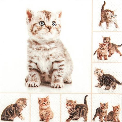 Napkins 33x33 cm - Meow